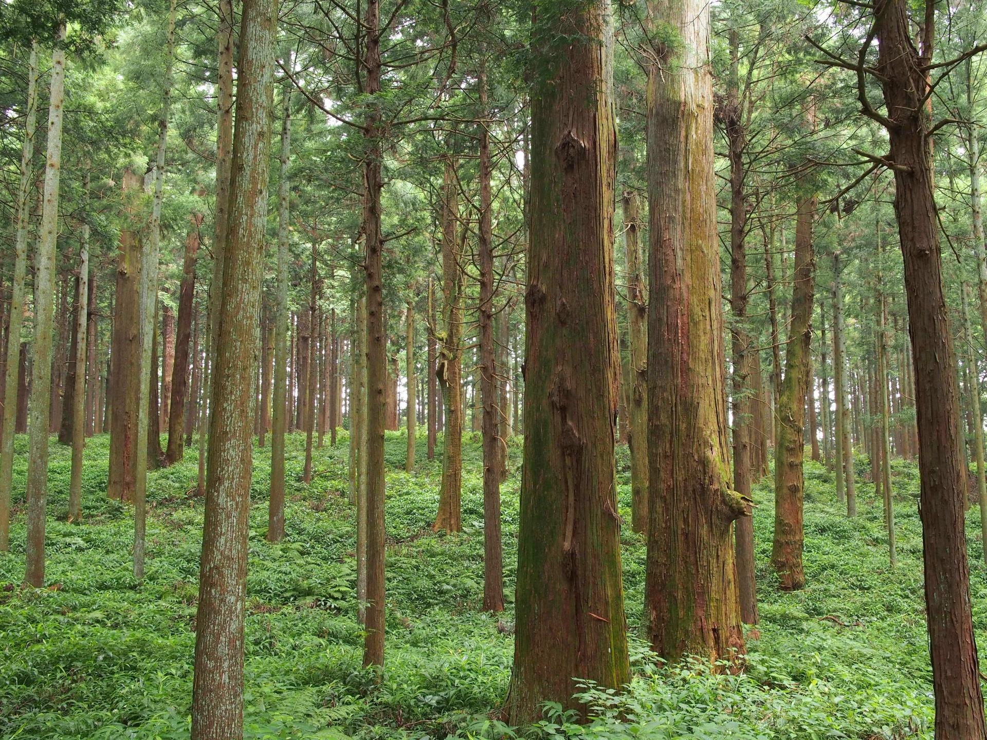 キハダ樹皮エキス